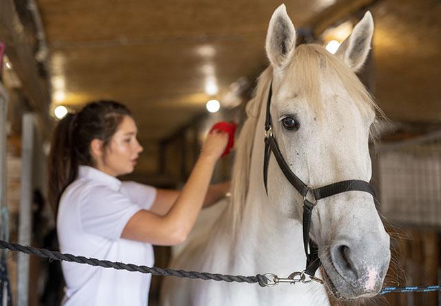 Cuidado y alivio natural para la piel de los caballos.
