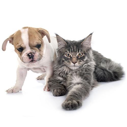 Productos KannaValley CBD para mascotas